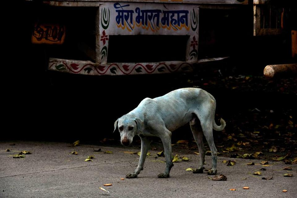 Navi Mumbai: Company responsible for turning dogs blue shut down