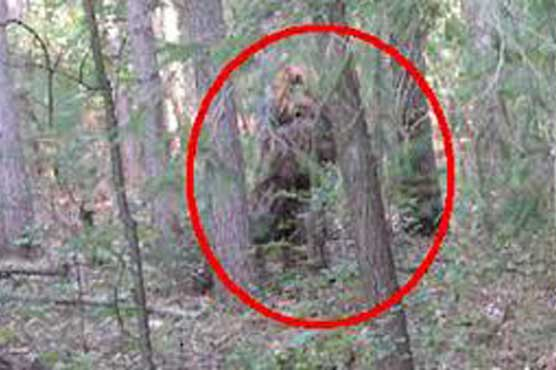 Dunya News: WeirdNews:-Bigfoot is real, say 'experts'...