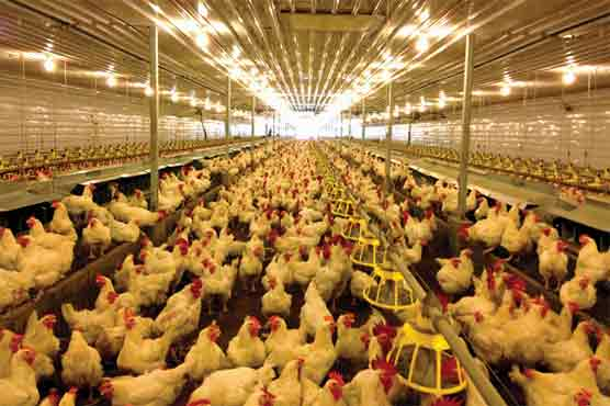 WTO: India unfairly blocking US poultry, egg imports