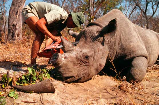 Ministers, non-governmental organisations (NGOs) and affected countries work together to stamp out wildlife crime at the 2018 Illegal Wildlife Trade Conference.        Ministers yesterday officially launched the London 2018 Illegal Wildlife Trade Conference, with less than a year to go before the...