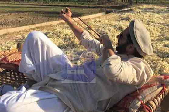 Shahid Afridi finds solace in agriculture