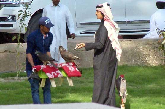 Baloch politicians condemn move to let Qatari princes hunt houbaras