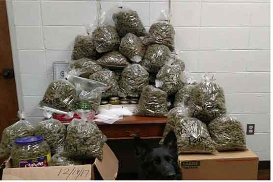 Elderly Couple Stopped With 60 Pounds Of 'Christmas' Weed Presents