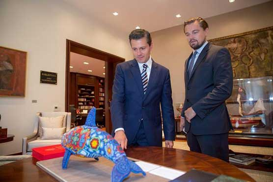 DiCaprio hails Mexican ban on type of fishing net killing porpoises