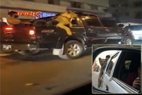 Karachi man held for taking lion on car ride