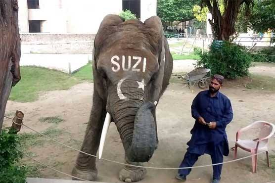 Lahore Zoo's only female elephant dies aged 35