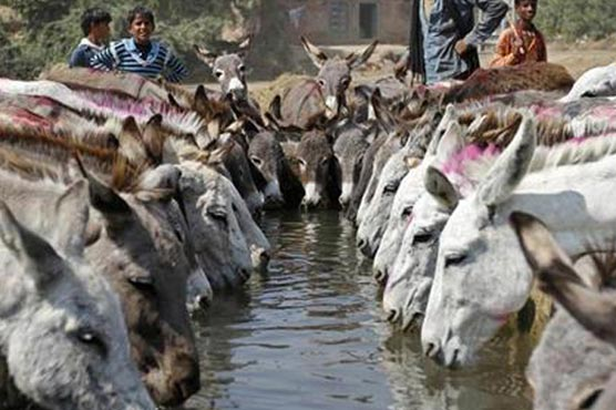 Donkey trade with China: Should Pakistan be worried?