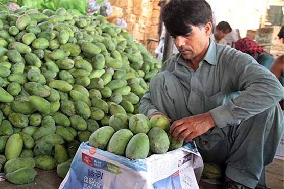 Pakistan targets 100,000 tons of mango exports this season