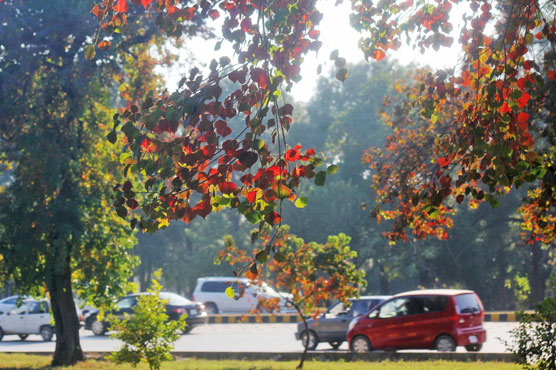 in pictures autumn season takes over the federal capital pakistan