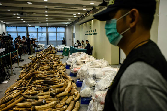 High ivory and rhino horn investigator discovered useless