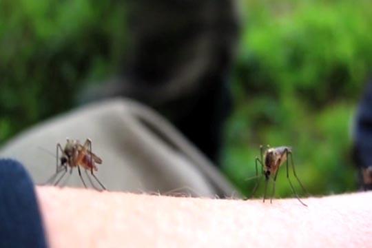 New mosquito repellent Kite patch to revolutionize Malaria control
