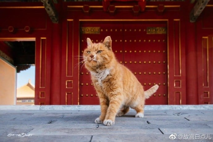 Psychic' Football World Cup Cat breathes his last in China