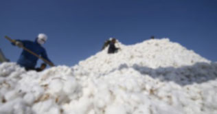 Cotton price falls after recession in global markets