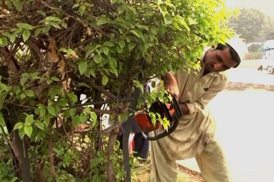 Peshawar: Paving greenbelts to make way for bus transit project