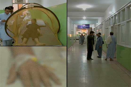 Dengue in Peshawar kills one more, death toll reaches 42