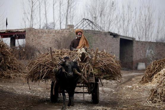 Pakistan struggles to export sugar surplus as global prices plunge