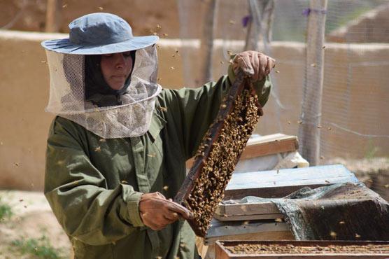 Busy bees turn Afghan schoolgirl into an entrepreneur