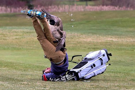 Goose attacks teen golfer during MI tournament