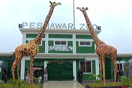 Peshawar gets its first zoo in 2018