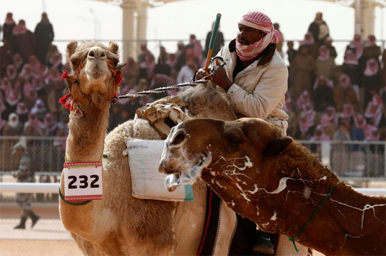 Prize camels keep tradition alive in changing Saudi, but please no Botox!