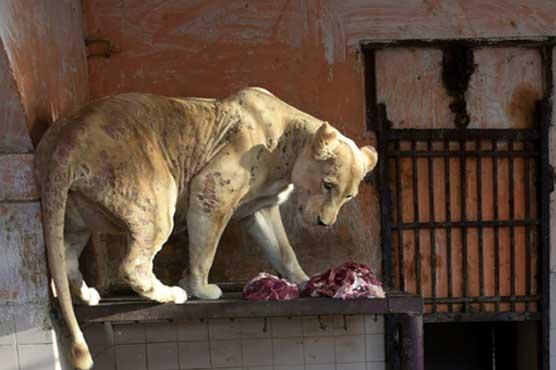 Karachi Zoo: Shortage of vets spells misery for animals