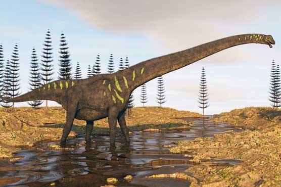 Largest dinosaur foot ever found was a Brachiosaurus relative
