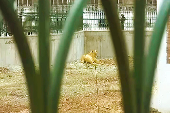 Animals in Peshawar zoo losing lives due to lack of staff