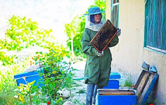 Afghan teenage beekeeper creates entrepreneurial buzz