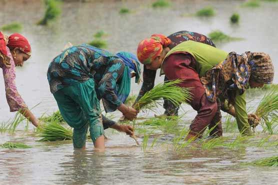 Rural women, the backbone of Pakistani society