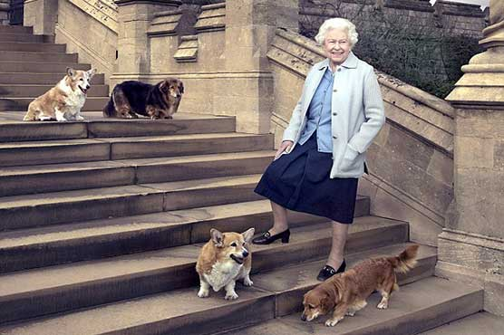 The Queen's last corgi has died aged 12