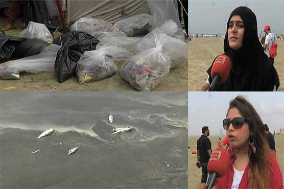 Dead fish, plastic bottles and bags on Karachi Sea view explain a tale of carelessness