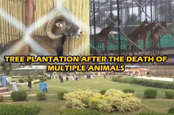 Tree tsunami hits Peshawar Zoo but after death of thirty animals