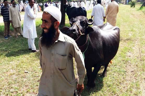 Man buys buffalo out of affection for ex-PM