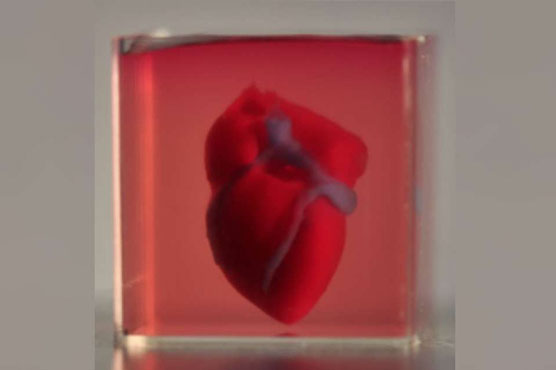 Israeli researchers print first 3D heart using patient's own cells