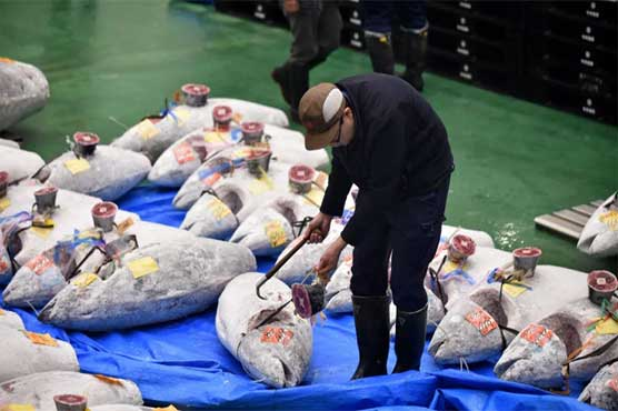 Tuna sells for record $3M in auction at Tokyo's new fish market