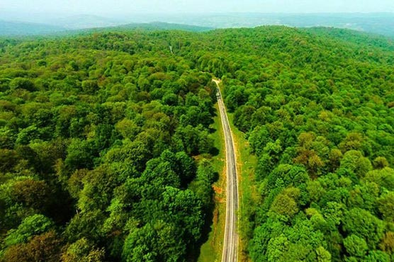 UNESCO adds Iranian forest to World Heritage List