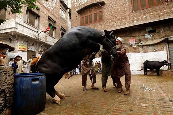 Eid-ul-Azha festivities, animal sacrifices continue on third day