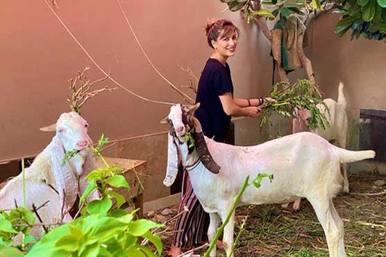 Mehwish Hayat misses her sacrificial animals