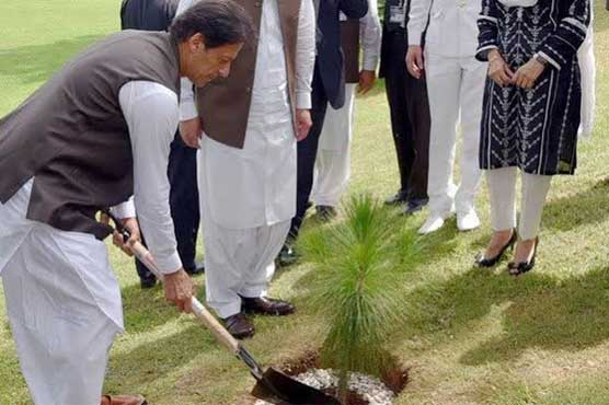PM to launch biggest ever drive to plant 3.5 mln trees a day
