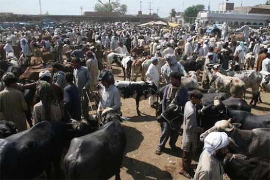 Eid-ul-Azha: Four cattle markets to be set up in Islamabad