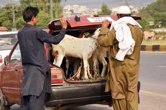 Govt announces three holidays for Eidul Azha