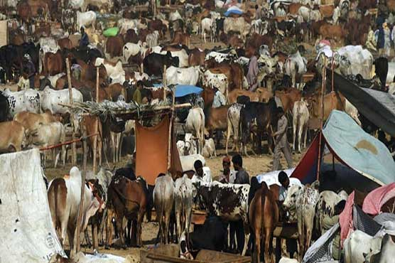 NCOC decides to launch crackdown against illegal cattle markets