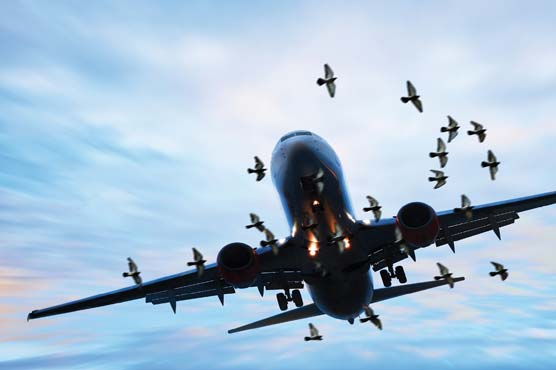 Public advised to properly dispose off animal remains over flight safety concerns on Eid-ul-Azha