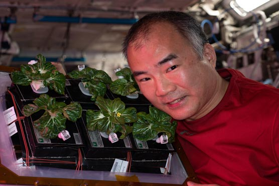 - 599420 38957910 - NASA Astronaut successfully grows plants in space – Technology