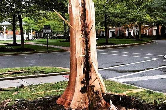 آسمانی بجلی سے درخت دو حصوں میں تقسیم، ویڈیو وائرل