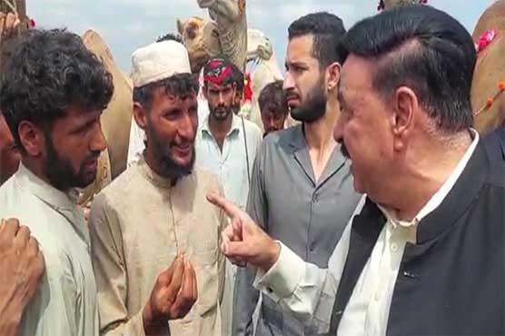 Sheikh Rashid purchases three camels for Eidul Azha