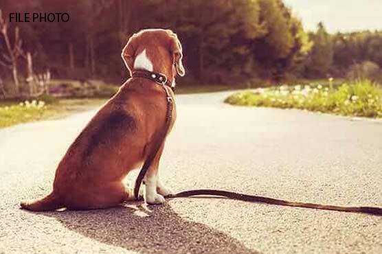 کمشنر گوجرانوالہ کا کتا گم، سارا عملہ کام چھوڑ کر ڈھونڈنے میں مصروف