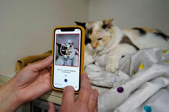 Feline okay? The app that tells you if your cat's happy