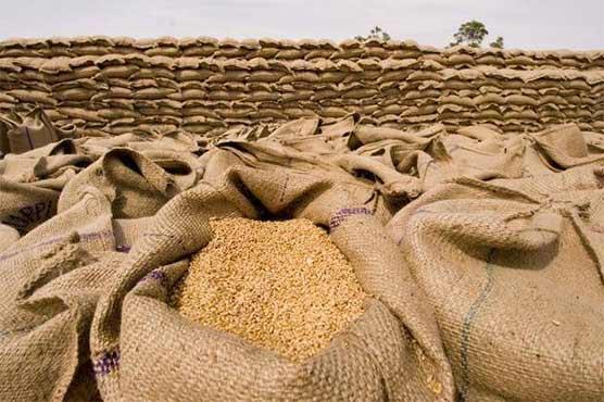 محکمہ خوراک پنجاب کا بڑا کارنامہ، 35 لاکھ میٹرک ٹن گندم خریداری کا ہدف مکمل