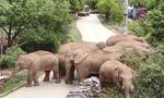 Nature bites back: Animals push human boundaries